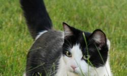 FREE TO A LOVING HOME Due to the onset of severe allergies in the family we have to unfortunately give up our two friends.  Mia (black/white) and Cleo (grey/white) are spayed four year old females.  They have grown up together and are loving and good