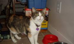 Two six year old sister spayed cats need a good home. Must let go of because of allergies. Both cats grew up together with kids and must go together. Very good with babies. Not good with dogs. Please call 250-319-1366.