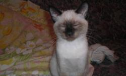 I am very proud to offer my 3 siamese female kittens for adoption. They are all very loving and prefer to hang out on your knee most of the day. They like to be cuddled and kissed. SERIOUS EMAILS ONLY tired of people putting them on hold and never showing