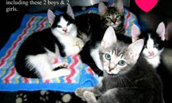 The Woodbury Veterinary Hospital has many beautiful, loving, playful cats and kittens up for adoption! PLEASE NOTE: Our Adoption fee includes: Combo Testing (FIV/FELV), Spay or Neuter, Vaccines, Microchip, Groom, De-wormer, Flea Treatments, a trial bag of