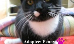 The Woodbury Veterinary Hospital has many beautiful, loving, playful cats and kittens up for adoption! PLEASE NOTE: Our Adoption fee includes: Combo Testing (FIV/FELV), Pre-Surgical blood testing with Spay or Neuter, Vaccines, Microchip, Groom, De-wormer,