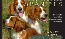 Beautiful rare Welsh Springer Spaniel puppies.  These bright wonderful little spaniels make loving loyal pets.  For inquiries please call 519-586-8514.