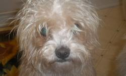 Two Yorkie-Poo's very lovable excellent with children and other animals good family dogs. $300.00