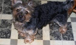 Cute and adorable 2 1/2 yr old yorkie needs a new home. He has a loveable, friendly, happy, demeanor and is about 11 inchs tall and weighs about 5-6 lbs. He has never had any health issues since we've had him nor did he come with any paper work. He is