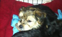 I have a 2 month old male puppy looking for a good home! Very small breed and house broken. He is fun and very cuddly. Please contact Katie Legge 780 880 7235 This ad was posted with the Kijiji Classifieds app.