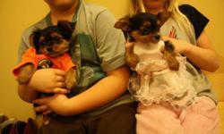 Hi we have 1 Male & 1 Female Yorkie Chihauhau Cross Puppies. Call 780-871-1884 Thanks
