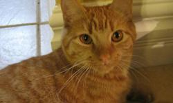 Young cat 11 mths, fixed, declawed, all shots and vet records