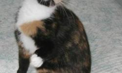 Breed: Calico   Age: Young   Sex: F   Size: S April is a beautiful young cat rescued through PAF (Pacific Animal Foundation). She has been waiting to be adopted since July. She weaned her own kittens at a very young age and she weaned a feral cat's