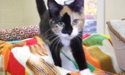 Breed: Calico   Age: Young   Sex: F   Size: M Bliss is a loving, affectionate, kind-hearted kitty just wanting true love! Visit www.petprojects.ca and fill out an online application to adopt this or any other of our deserving pets, or email