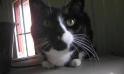 Breed: Domestic Short Hair-black and white   Age: Young   Sex: F   Size: S For more info on this pet or the many others awaiting life partnerships, feel free to check out our site at www.gimlihumanesociety.org   View this pet on Petfinder.com Contact: The