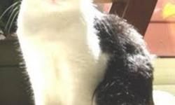 Breed: Domestic Short Hair-black and white   Age: Young   Sex: F   Size: M RESCUE: Waverley and her siblings were first noticed by a woman who put food out for her momma. She had not realized that the momma cat, Willa, was pregnant, as she was well fed