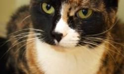 Breed: Domestic Short Hair Calico   Age: Young   Sex: F   Size: M   View this pet on Petfinder.com Contact: NS SPCA Provincial Animal Shelter | Dartmouth, NS