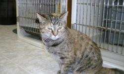 Breed: Domestic Short Hair Tabby   Age: Young   Sex: F   Size: M Summer and her sister Sophie were dropped off in a carrier by our front door last fall. It took Summer and Sophie some time to be sociable. Neither one of them would eat for the longest time