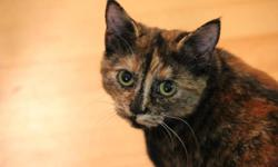 Young female cat named Alley who is VERY affectionate and was brought up around dogs and cats, also plays very well with them. Extremely well natured, and playful at that. Comes with easy clean, hands free rolling litter box, cat bed, food and water