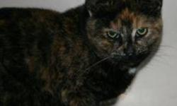 Breed: Calico   Age: Young   Sex: F   Size: M Leana is a one year old Calico.   View this pet on Petfinder.com Contact: Shelter of Hope Animal Services | Cobourg, ON