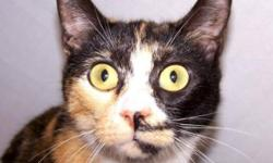 Breed: Tortoiseshell   Age: Young   Sex: F   Size: M This is beautiful Ming and her coat of many colors is just gorgeous. She is sweet, friendly, and would rather be home cuddled up with you. Give a homeless kitty a chance! Give Ming a chance to show you