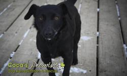 Breed: Dachshund   Age: Young   Sex: F   Size: S ANNIE was found under a tarp in the snow, very cold, scared and hungry. She is currently in a foster home with 5 dogs and 2 cats. She is a very playful dog that seems to do well with dogs of various sizes