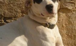 Breed: Pit Bull Terrier   Age: Young   Sex: F   Size: L Paloma is a super affectionate dog that loves nothing more than to follow her human around. She is rather pushy when it comes to the lovin', giving a nudge to ask for your hand or laying her head on
