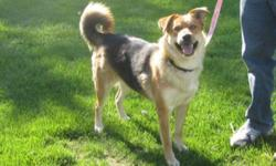 Breed: Sheep Dog Husky   Age: Young   Sex: F   Size: L Prairie is one of the new kids on the block here at Funds for Furry Friends. She is a very personable dog, who is outgoing and playful. While Prairie does love to jump and play, she does have some