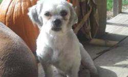 Breed: Shih Tzu   Age: Young   Sex: F   Size: S Please read all the way to the bottom of this page BEFORE making an inquiry. Today is November 28, 2011 I have never known a home. I have never had a soft bed to sleep in. I have never known love, and I have