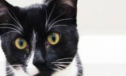 "Breed: Tuxedo   Age: Young   Sex: M   Size: S The clinic says of Carter: ""He is a typical teenage boy. Lots of energy and loves to play. He seems to get along with any sort of animal that comes his way and is quick to make friends. He's a very sweet boy"
