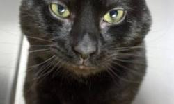 Breed: Domestic Short Hair   Age: Young   Sex: M   Size: M   View this pet on Petfinder.com Contact: NS SPCA Provincial Animal Shelter   Dartmouth, NS
