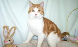 Breed: Domestic Short Hair - orange and white   Age: Young   Sex: M   Size: M Our Marmalade is just as sweet as his name. He's a handsome orange and white boy who would love to have a home of his own. Marmalade has a great personality and he'd love a