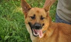 Breed: Belgian Shepherd Malinois German Shepherd Dog   Age: Young   Sex: M   Size: XL Rocky a really good boy, I listen well and try to please. I know how to sit , shake a paw,I come when I'm told and I go into my run when asked. Rocky is about 3 yrs
